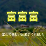 【富富富(ふふふ)】極上の旨味と粘り!富山に新しい品種のお米が誕生しました