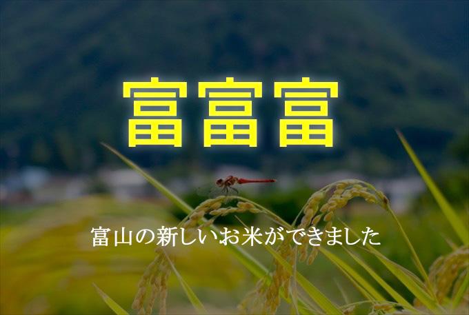 【富富富(ふふふ)】極上の旨味と粘り!富山の新しいお米の特徴と魅力とは