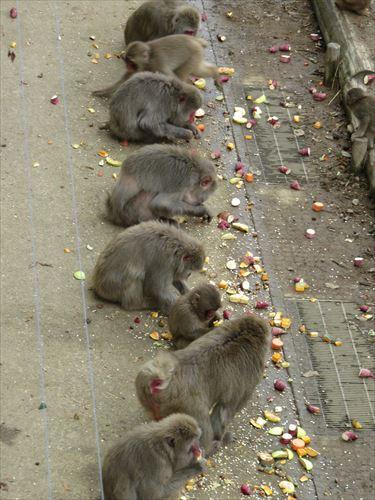 猿のごっくんタイム