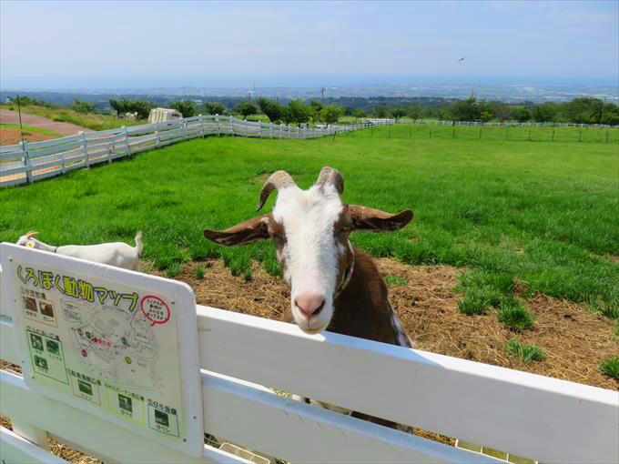 くろべ牧場 まきばの風のヤギ