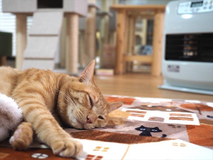 高岡にある譲渡型 保護ネコカフェ「ネコのしっぽ」にお邪魔してみた