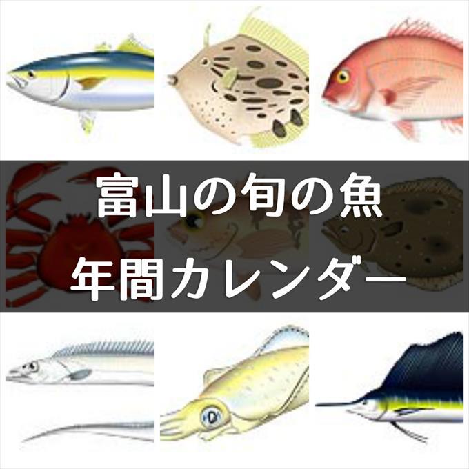 富山の旬の魚がひと目で分かる!年間カレンダーと解説つき