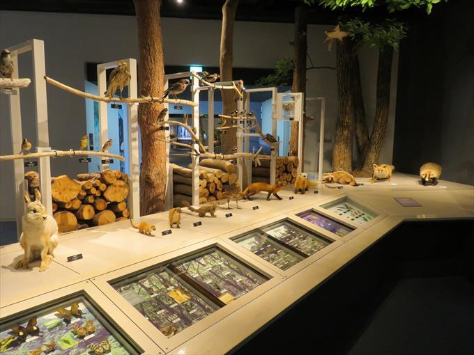 富山市科学博物館の展示物2
