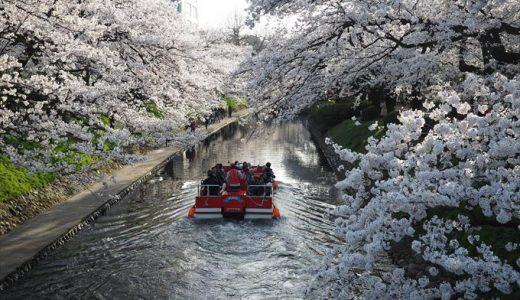 富山市で花見酒の名所といえば松川べりで決まり!