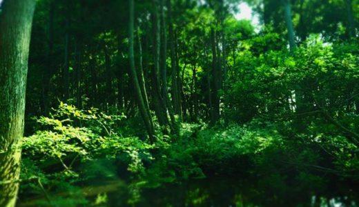 入善町パワースポット『杉沢の沢スギ』で幻想的な癒やしの空間に浸ろう