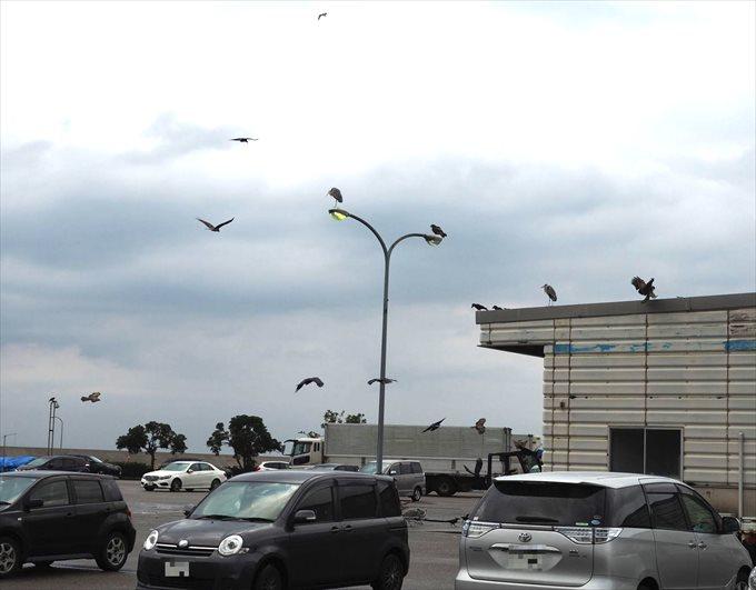 氷見漁港の鳥