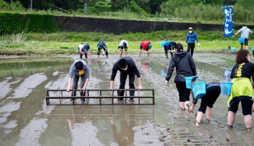 【玉旭田植体験会2021】酒米田植えイベントで初の田植えに挑戦!